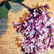 Defining Lilacs Art Print