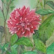 Dahlia Flower Grown In Apartment Garden Art Print