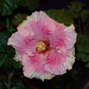 Delicate Pink Flower Art Print
