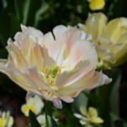 Delicate Pink Tulip 2 Art Print