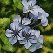 Delicate Plumbago Painted In Van Goch Style Art Print