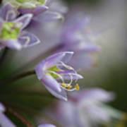 Delicate Purple Flowers Art Print
