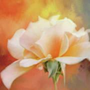Delicate Rose On Color Splash Art Print