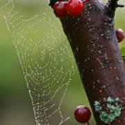 Delicate Spider Weave Art Print