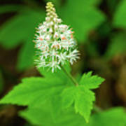 Delicate Wildflower Georgia Mountains Art Print