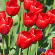 Delicious Tulips Art Print