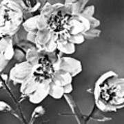Delphinium Black And White Art Print