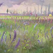 Delphiniums, Storm Passing Art Print