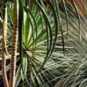 Desert Botanical Art Print