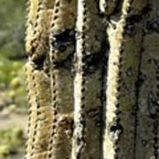 Desert Cactus 6 Art Print