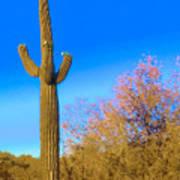 Desert Duo In Bloom Art Print