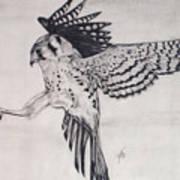 Falcon I Art Print