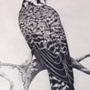 Desert Hawk II Art Print