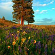 Desert Pines Meadow Art Print