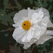 Desert Poppies Art Print