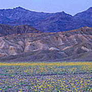 Desert Wildflowers, Death Valley Art Print