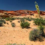 Desert Yucca In Bloom Valley Of Fire Art Print