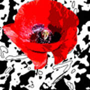 Design Poppy Art Print
