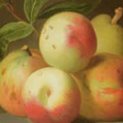 Detail Of Apples On A Shelf Art Print