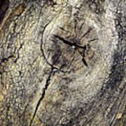 Detail Stumps On Old Wood Art Print