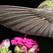 Details Of The Hummingbird Wing Art Print