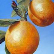 Deux Oranges Art Print
