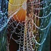 Dew Covered Web Art Print