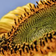 Dew Drop Bee.... Art Print