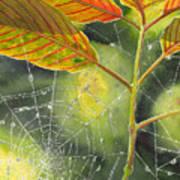 Dew Drop Art Print