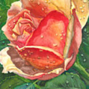 Dew Drop Rose Art Print