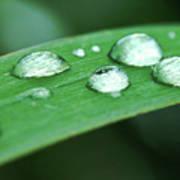 Dew Drops On A Blade Of Grass Art Print