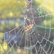 Dew Drops On A Spider Web Art Print