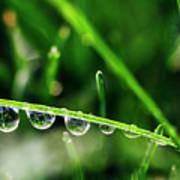 Dew Drops On Blade Of Grass Art Print