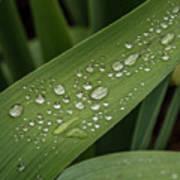 Dew Drops On Leaf Art Print