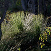 Dew On A Grass Tree Art Print