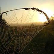 Dew On Spider Web At Sunrise Art Print