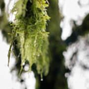 Dewy Moss Art Print