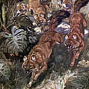 Dhole, Endangered Species Art Print