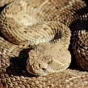 Diamondback Rattlesnake Close-up 062414a Art Print