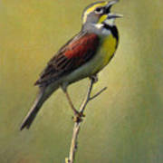Dickcissel Summer Song Art Print