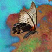 Digital Art Butterfly Art Print