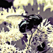 Digital Bottle Fly Art Print