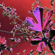Figtree Leaves 3 Art Print