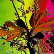 Figtree Leaves 4 Art Print