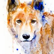 Dingo Art Print