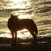 Dingo Sunset Art Print