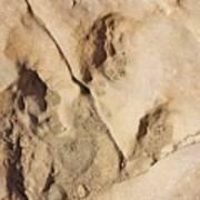 Dino Tracks In The Desert 3 Art Print