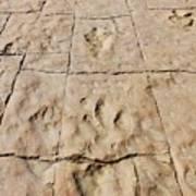 Dino Tracks In The Desert 4 Art Print