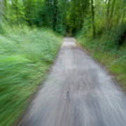 Dirt Path And Surrounding Bush Seen From A Cyclist's Point Of View Art Print