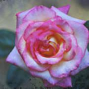 Dirty Pink Rose Art Print